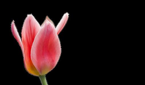 blossom-2063355__340